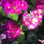 Niagara Floral Showhouse a Place for all Seasons