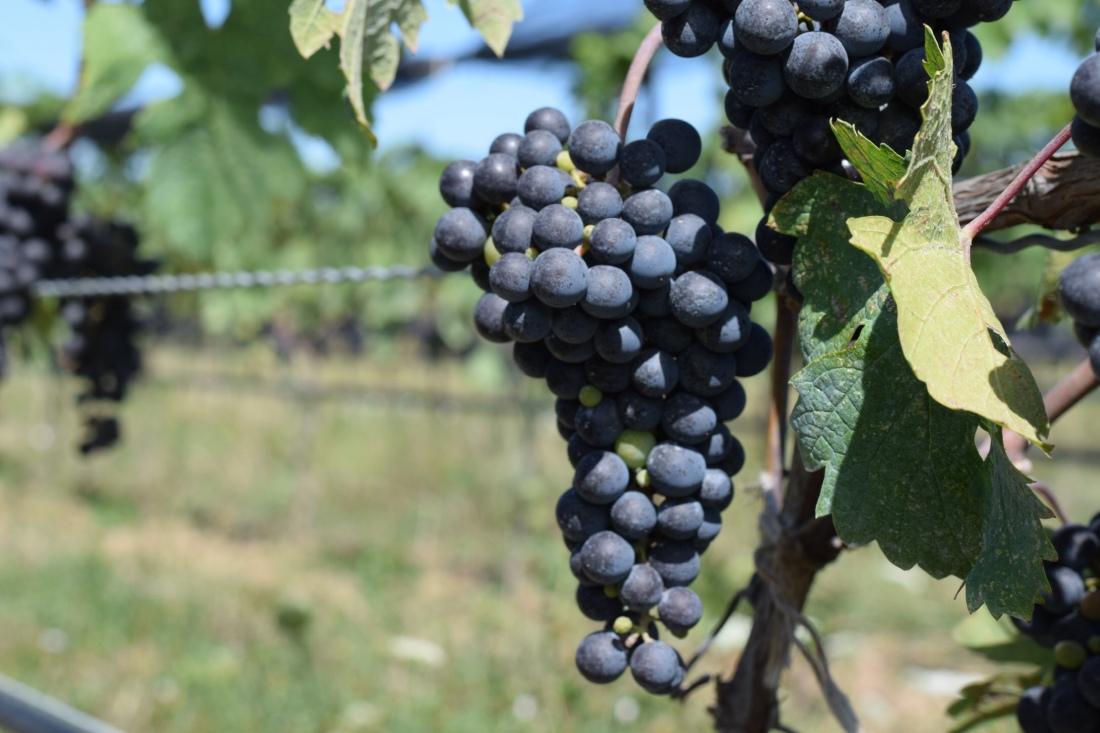 Coutada Velha 2018 Portugese Red Wine Alentejo